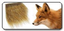 Pelo di volpe (Fox Hair)