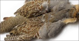 Pernice Partridge