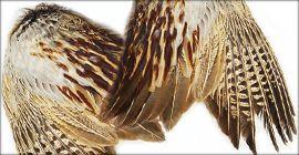 Ali di fagiano Pheasant Wings