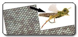 Flex Wing