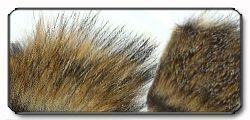 Pelo di marmotta Woodchuck