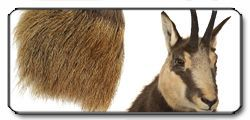 Chamois Hair natural