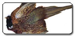 Pheasant Whole Skin