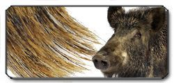 Setole di cinghiale (Wild Boar)