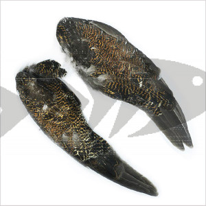 Grouse Wing Pair | Wing and Hackle fly tying material