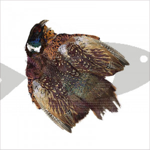 Cock Pheasant Ringneck Whole Skin - No tail - For many fly patterns, as wing, body tail material