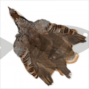 French Partridge Complete Skin | French Partridge Feathers