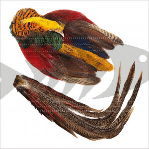 Golden Pheasant Complete | Head, Body & Tail