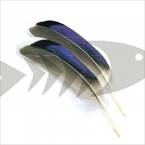 Mallard Duck Wing Quills | Wing Fly Tying Feathers