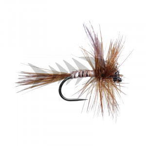 Ginger Quill BL