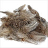 English Partridge Feathers Brown Back
