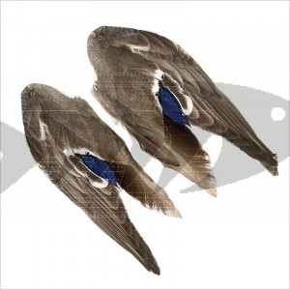 Ali di germano - Mallard Duck Wings | Grande varietà di piume per costruzione mosche