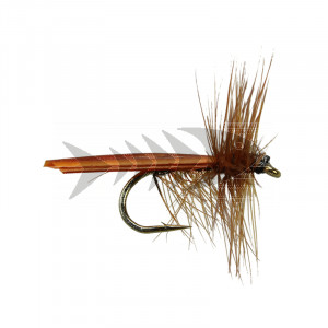 Brown Stone Fly